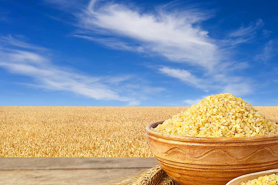 couscous raw grain and wheat crop