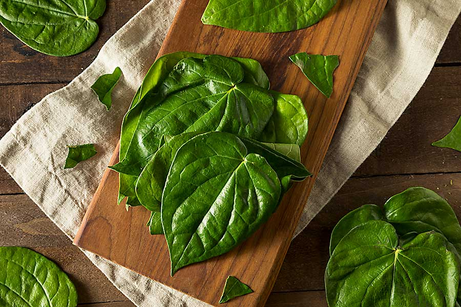 Raw Organic Green Betel Leaves Ready to Cook With