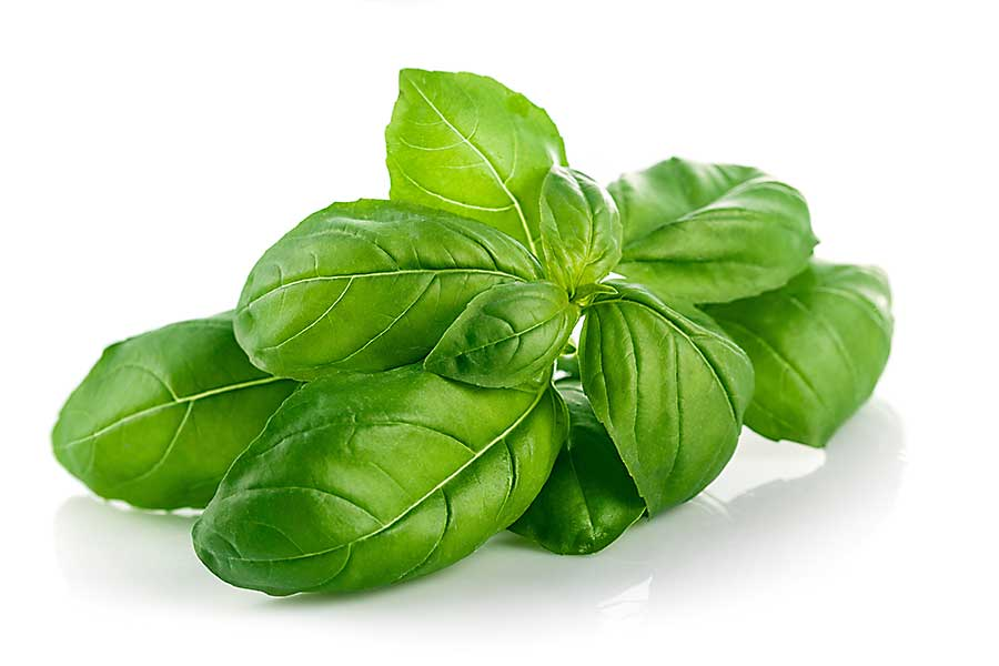 Basil leaves close-up