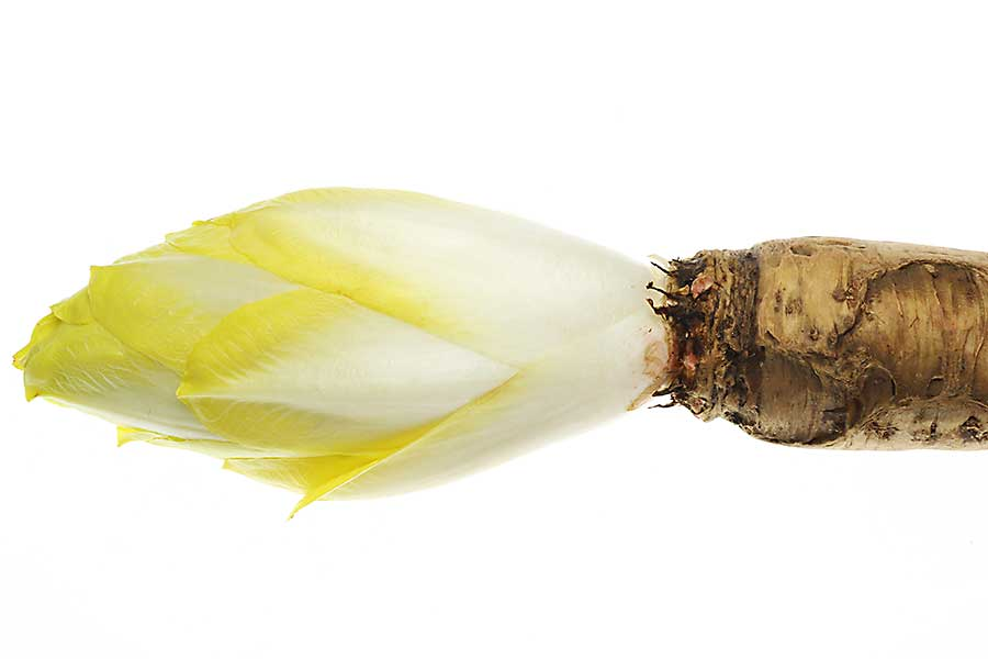 Belgian endive with root
