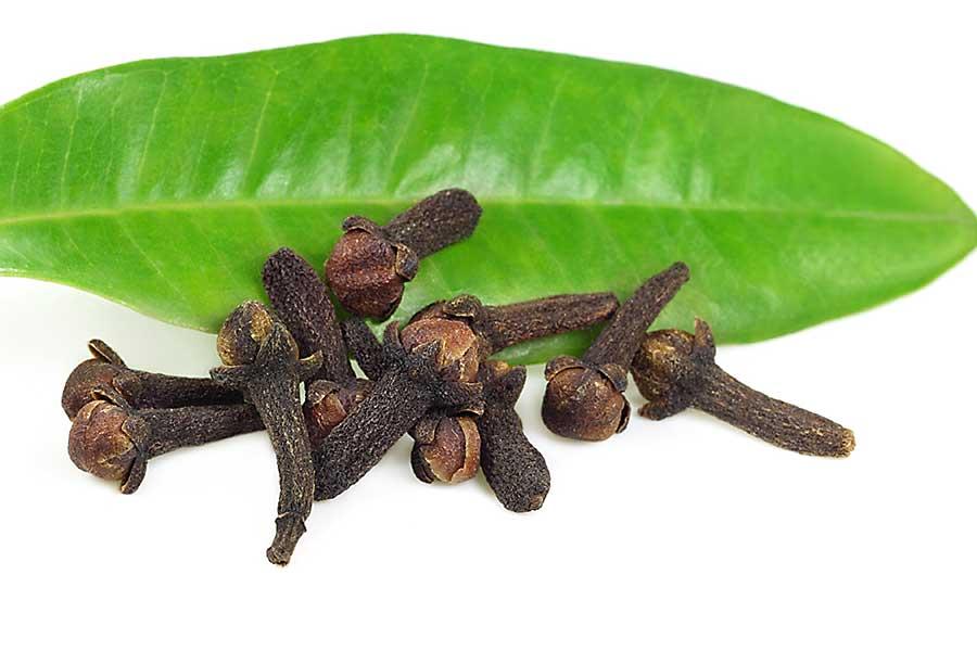 Dried cloves on the clove leaf