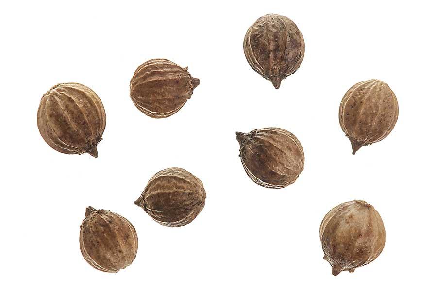 Coriander seed closeup