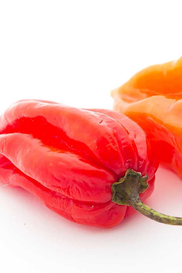 Red habanero close-up
