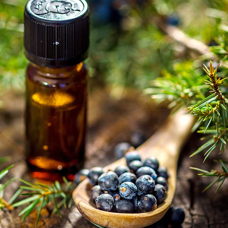 Juniper berries and oil