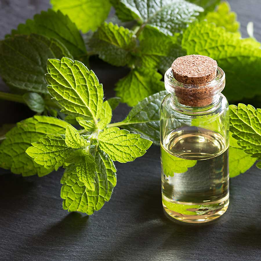 Lemon balm leaves and essential oil