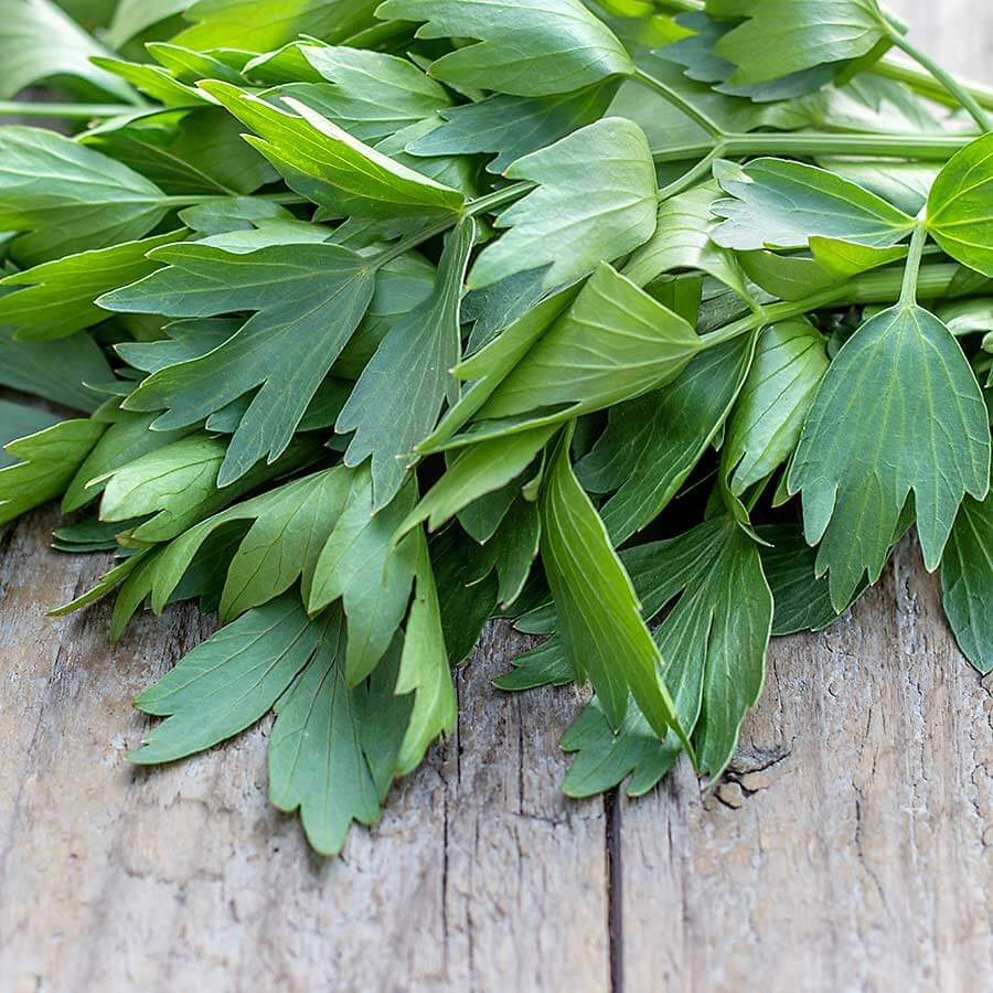 Lovage fresh leaves