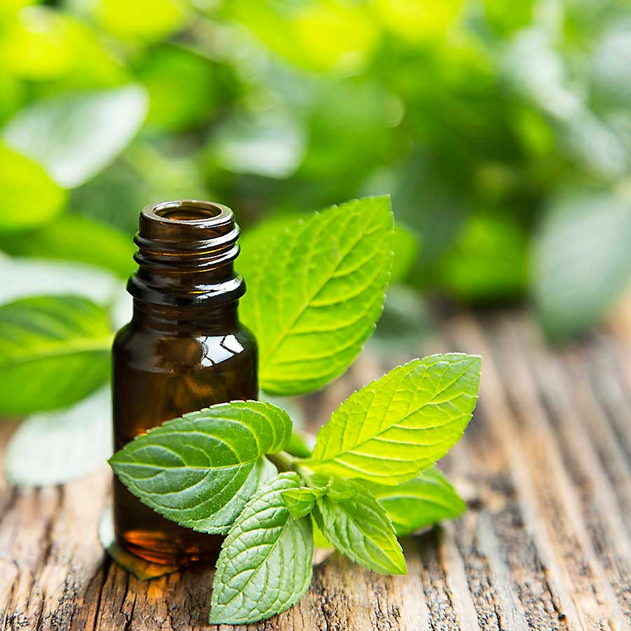 Mint leaves and essential oil
