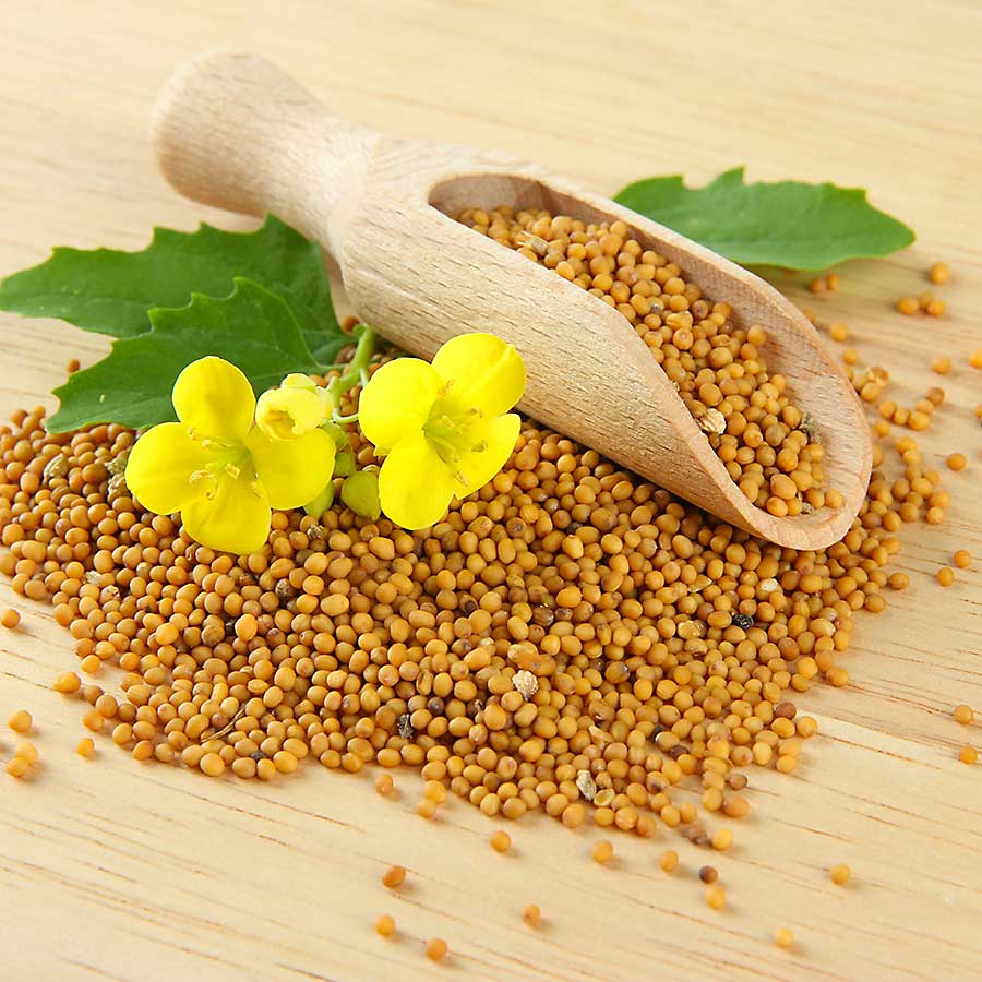 Mustard seed and flowers