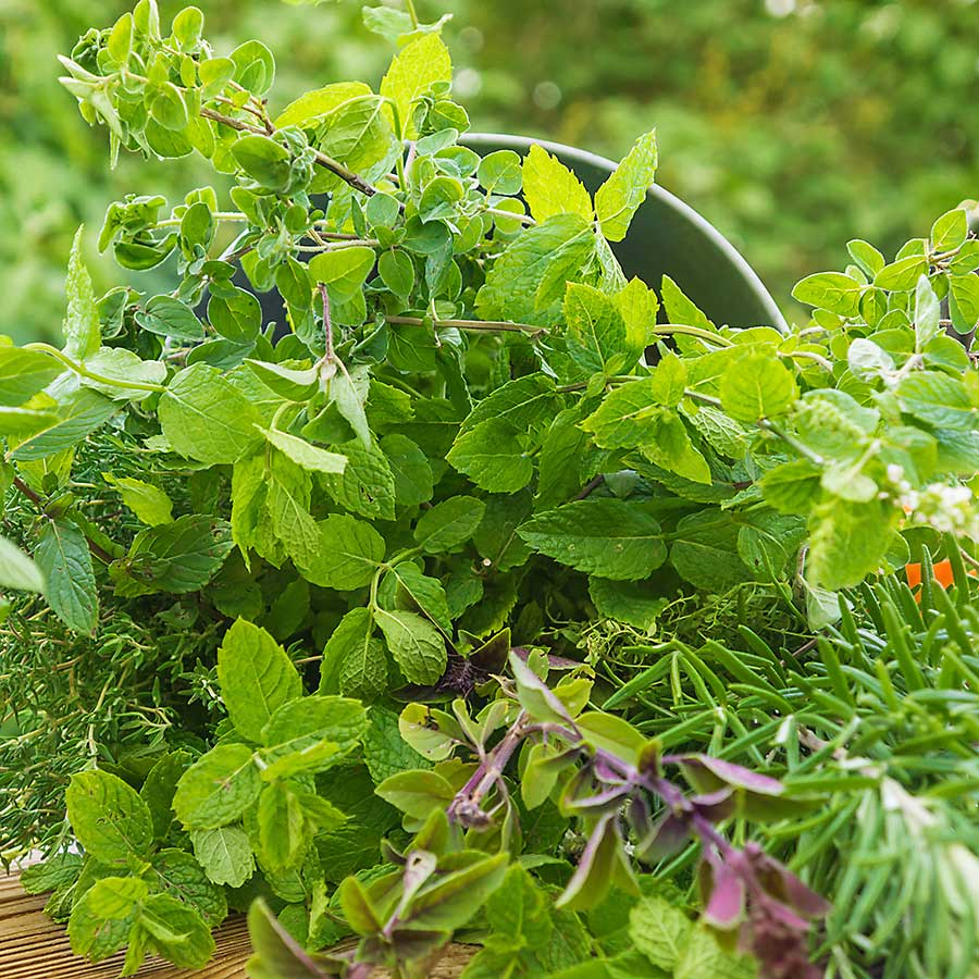 Oregano and another herbs